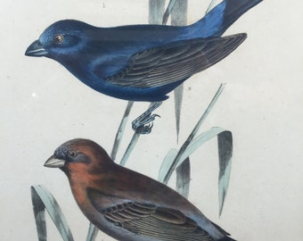 Vintage Hand Colored Us Mexican Boundary Survey Emory 1857 Two Birds Historical