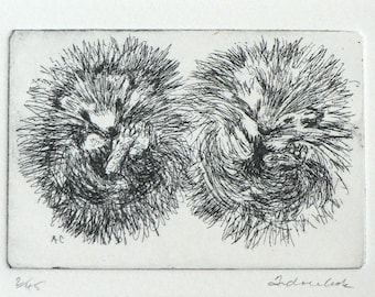 original etching of 2 hedgehogs