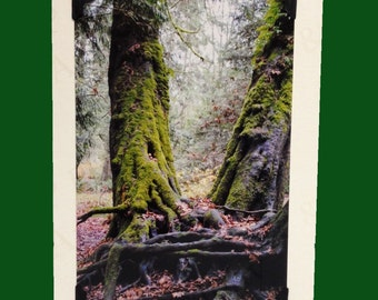 Handmade card, PHOTO Blank CARD, photo note card, birthday card, forest Decor, special occasion card, old growth trees, ENCHANTED forest
