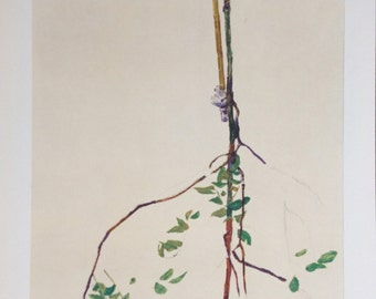 """Schiele Egon, 28, Lithograph, """"Young Tree"""""""