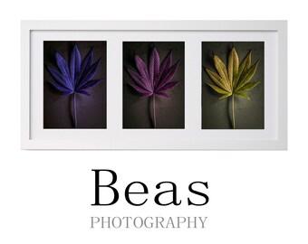Cannabis, artistic photography series, wall art, salon decoration, artistic photography, Beasfotografia