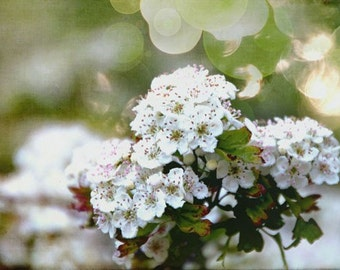 Beautiful Bokeh Blossoms 8 X 10 inch Signed Fine Art Photograph