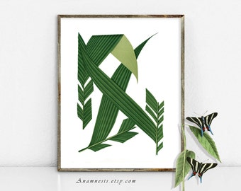 PALM TREE FRONDS 01 - digital image download - printable antique plant illustration retooled by Anamnesis - image transfer - totes, pillows