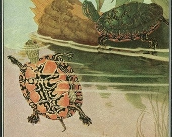 Nature Magazine - View of Two Turtles in a Pond (Art Prints available in multiple sizes)