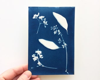 4x6 Original Cyanotype Print of Seeded Eucalyptus, Botanical Print, Gift for Artist, Gift for Gardener, Nature Lover Gift