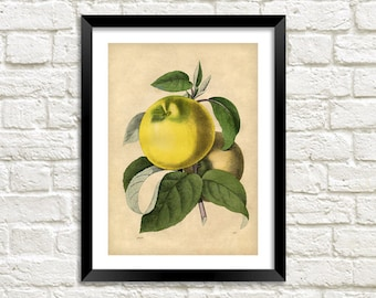 APPLE ART PRINT: Vintage Fruit Illustration Wall Hanging (A4 / A3 Size)