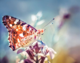 Butterfly Photograph: nature photography, spring photo, painted lady butterfly, boho, nursery decor, whimsical decor,, orange & blue