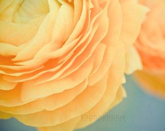 botanical photography, yellow, ranunculus, soft yellow, butter yellow, flower, robins egg blue, nature / buttery no. 2 / 8x10 fine art photo