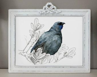 New Zealand native bird Kōkako, illustrated Large print, from original watercolor and ink painting artwork, Wild life wall art