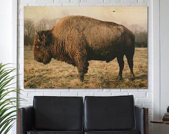 Bison Buffalo, Buffalo Photography, Wall Art, Rustic Country Scene, Wildlife photography, Oklahoma buffalo, Midwest, Fall Decor, Fall Colors