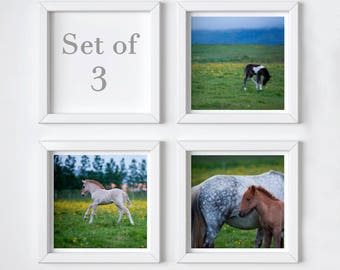Foals print set of 3 - Sale 25% OFF - Iceland baby horse photos - Nursery wall decor set - Small art gift - Stocking stuffer - 5x5 square