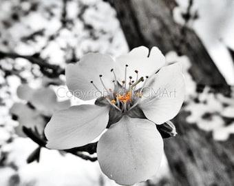 Almond blossom - fine art photograph, dreamy wall art, spring, summer, happy, inspirational, office, home decor, sakura, flower, tree, dorm