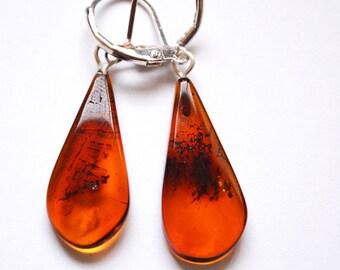 Baltic Amber Earrings - Brown Color