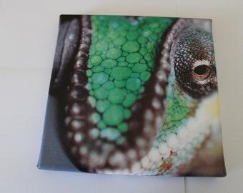 Chameleon Photo Canvas print