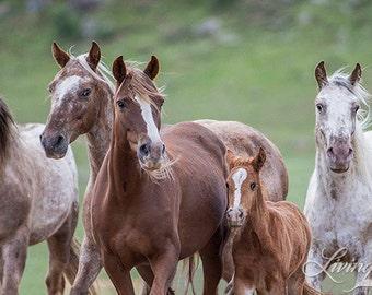 Bronze Warrior and His Family at Black Hills Sanctuary - Fine Art  Horse Photograph - Wild Horse - Adobe Appys - Appaloosas