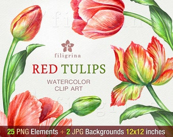 Red Tulips WATERCOLOR Clip Art. Fresh garden flowers arrangement, green leaves, spring bouquet. 25 elements, 2 backgrounds. Read about usage