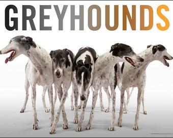 Fine Art Greyhound Poster