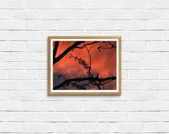 Redbud Tree Sunset Silhouette