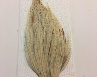 Grade 2 Variant Dry Fly Cape