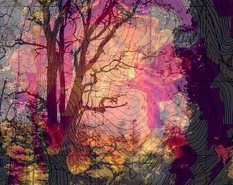 Photos of Trees,Tree Wall Art,Photographs of Trees,Tree Art Photo,Picture of Tree Wall Art,Photographs of Topographical Tree,Photo of Trees