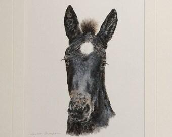 baby horse, original horse painting, colt or foal art, realism horse art, black and white art, horse art, animal art, wall art, home decor