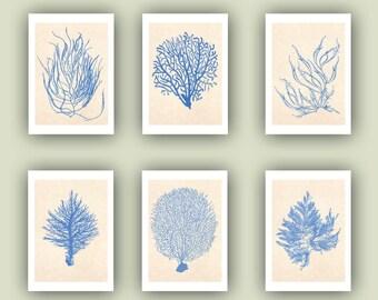 Sea fan Prints, Ocean seafan Print, Sealife Nautical Art, Blue Sea fan art, beach cottage decor, coral art, Set 6 seafan Print