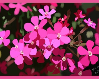 Flower Greeting Card, Blank, Rock Soapwort Design No A6045