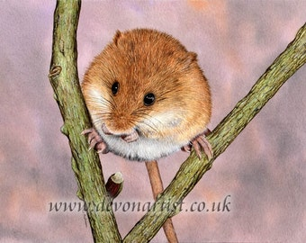 Animal Watercolour, Original Painting, Harvest Mouse, Watercolor, Nature or Animal Illustration