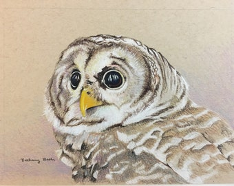 "Barred Owl - original colored pencil drawing 5""x7"""