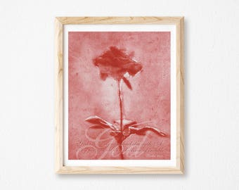"Rose Collage Photography, Christian Wall Art Decor, Inspirational Rose Art, Floral Art Print, God Inspired Print, Red Rose Print, 8"" x 10""."