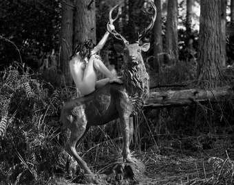 The Stag, Ready for hanging, Only 1 available!