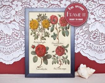 """Vintage illustration of Roses - framed fine art print, flower art, 8""""x10"""" ; 11""""x14"""", FREE SHIPPING - 94"""