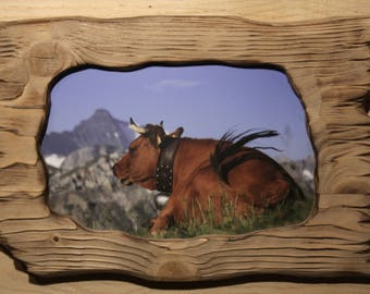 BRUSHED TARINE COW PICTURE WOOD FRAME 2