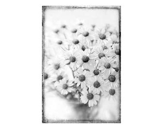 Black and White Photography, Daisy Flower Still Life, White Daisy Farmhouse Decor,  Floral Art Print, Vintage Style Art