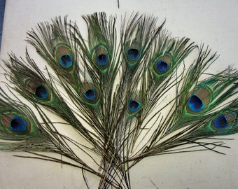10 Peacock eyes  Peacock feathers Peacock plumes craft feathers wedding feathers
