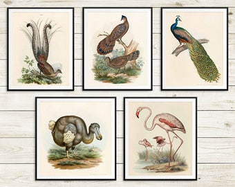 Vintage bird art prints, old book illustrations, vintage bird illustrations, bird posters, ornithologist gifts, dining room decor, small art