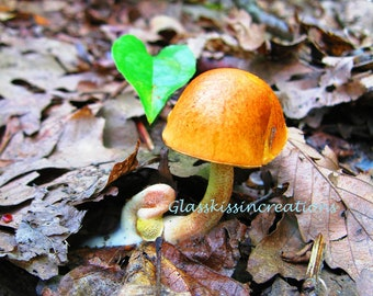 """True Love -On The Forest Floor-26 -5 x 7"""" Fine Art Photography Print"""