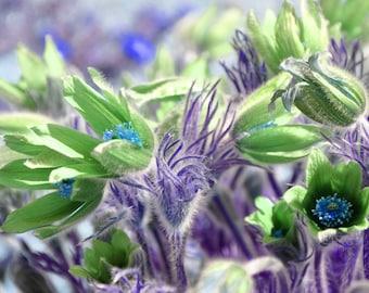 Green and Purple Garden, digital downloadable art