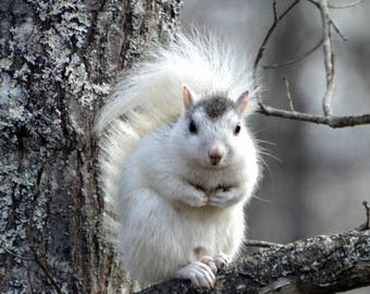 White Squirrel, Squirrel Photography, Nature Photography, Wildlife Photography, Brevard White Squirrel, Wall Art