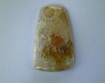 Agatized Coral Custom Cabochon