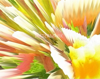 Abstract Flower Yellow Pink White