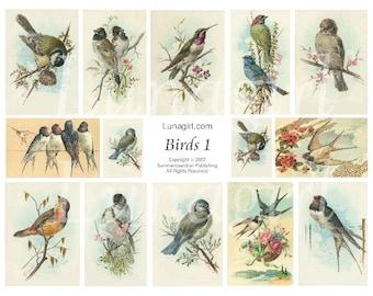 Victorian BIRDS digital collage sheet, DOWNLOAD vintage images Woodland art cards illustrations, garden spring nature ephemera, printables