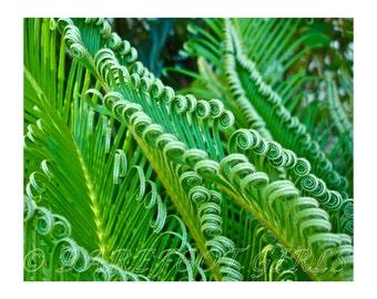 Fern Palm - Sago Palm - Tropical Fern - Fine Art Photographic Print