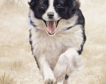 Aceo Dog Print, Border Collie. From an Original Painting by Award Winning Artist JOHN SILVER. Personally signed. BC013AC