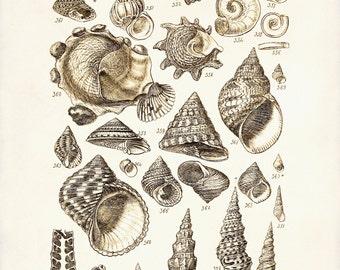 Seashells Print, Beach Home Decor, Shells Illustration, Marine Life, Coastal Decor, Beach Art, Seashell Poster