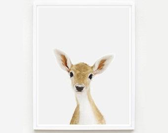 Baby Animal Nursery Art Print. Baby Deer Little Darling. Fawn Print. Animal Wall Art.  Animal Nursery Decor. Baby Animal Photo.