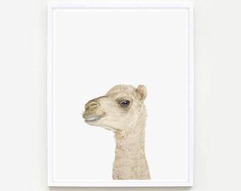 Baby Animal Nursery Art Print. Baby Camel Little Darling. Animal Wall Art. Animal Nursery Decor. Baby Animal Photo.