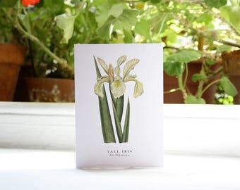 Tall Iris: Greeting Card