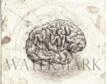 Brain, 'Speaks' Original Etching, by Rosie McLay. Printmaker Bristol Human Anatomy Medical Art Medicine Surgery Muscle Organ Body Skeleton