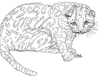 ocelot leopard wild cat illustration art print